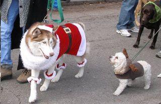 Big Santa Dog, little elf dog