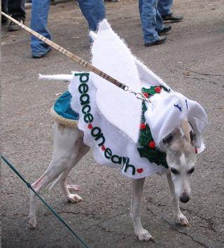 Angel greyhound