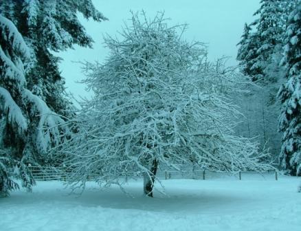 Snow12-22-08a-sm