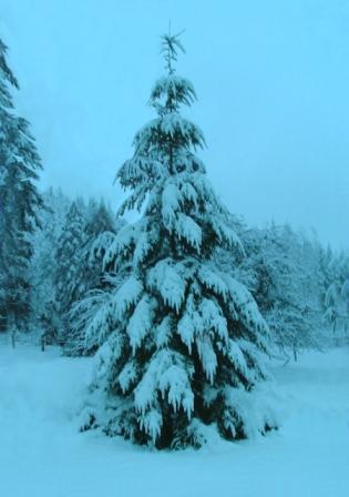 Snow12-24-08c-sm