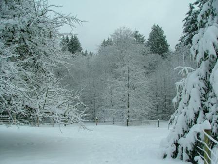 Snow12-22-08L-sm