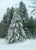 Snow12-21-08b-sm