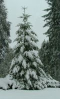 Snow12-21-08h-sm