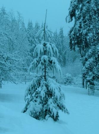 Snow12-24-08a-sm
