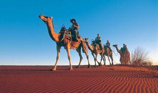 Camel-trek620