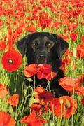 Monty & poppies