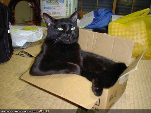 Wenches boxsitting 7