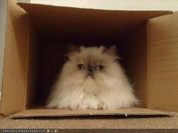 Wenches boxsitting 6