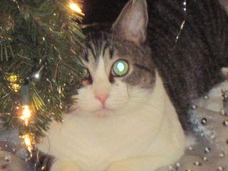 Reggie at Christmas 001
