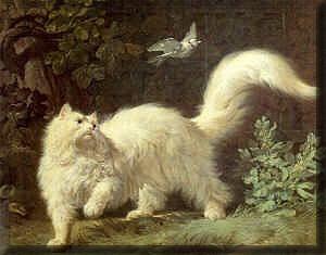 Jean-jacques bachelier 1761 Angora-cat-12