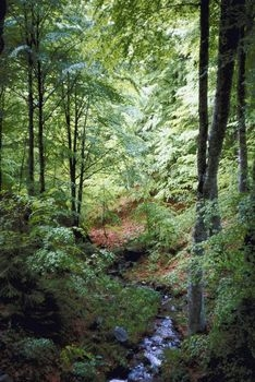 English forest
