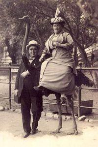 Ostrich-Aside-1910