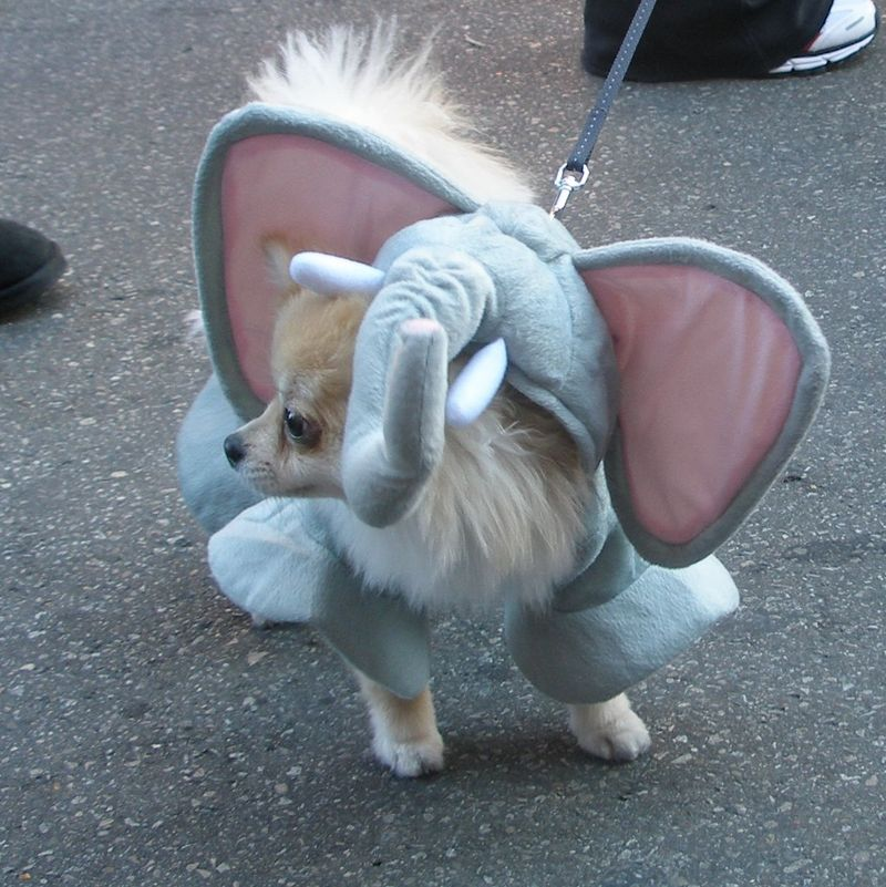 Elephantpup