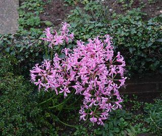 Jo--garden  flowers