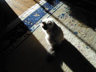 Catcastingshadow