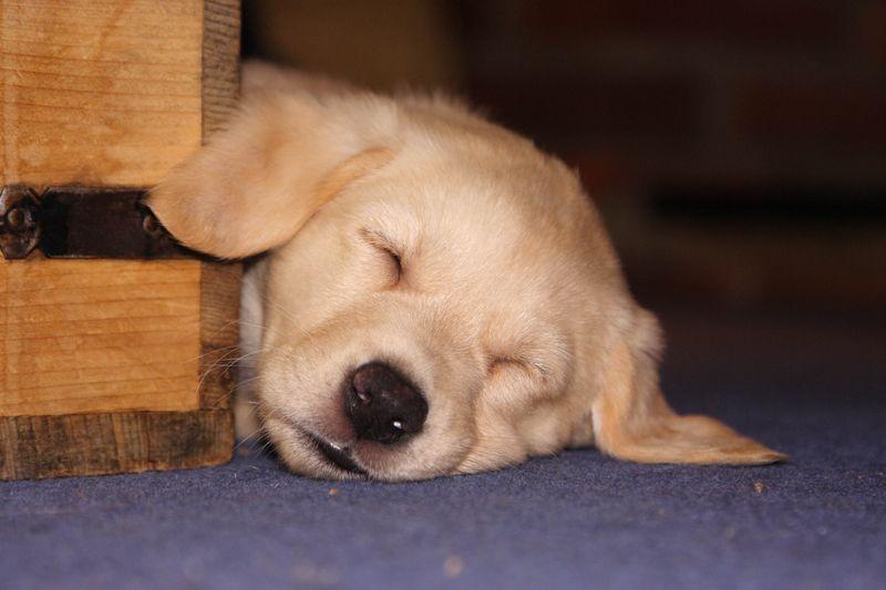 Rochester sleeping