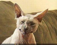 Nastycat