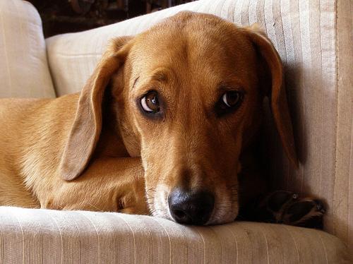 Worrydog cc petadviser
