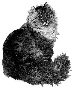 Cat--fluffy 339 Dober