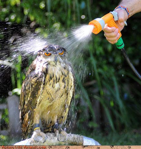 Owl water