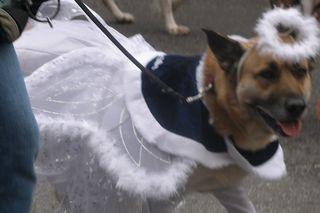 Angel dogs on high