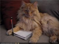 Writercat