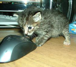 Kit&Mouse