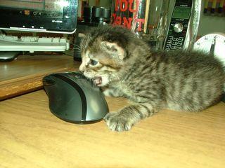 KittenMouse2