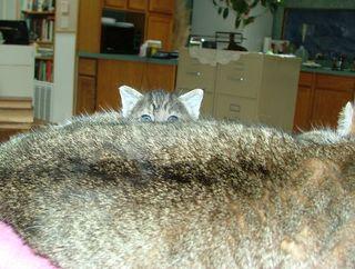 Peek-a-Boo2