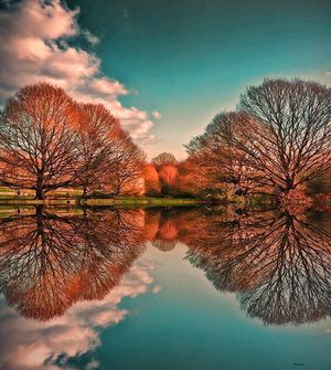 TreeReflections