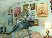 Treadmill2a