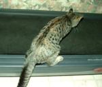 Treadmill1a