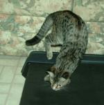Treadmill3a