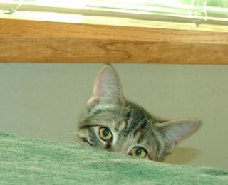 Peek-a-Boo17