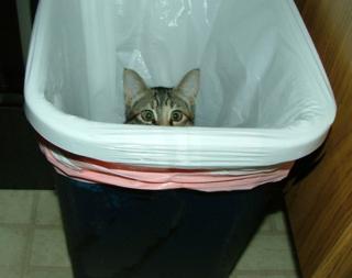 Garbage2sm