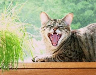 Yawn1sm