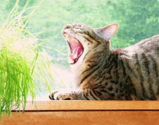 Yawn2sm