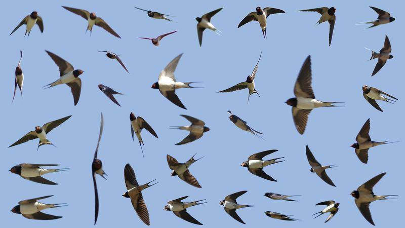 M7858 - m7965e m35, all swallows in flight, t100, J&MJ