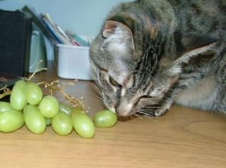 Grapes1sm