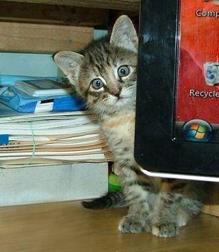 Kittencomputer