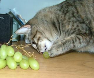 Grapes2sm