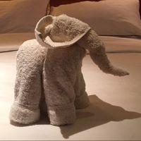 Elephant towels