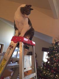Reggie looking at the tree