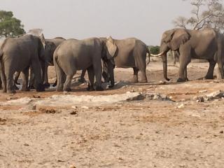 Multi-elephants