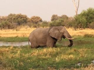 Happy splashing elephant