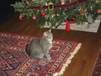 Christmas and cats 2014 005