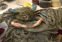 My blue crab