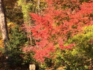 Autumn leaves 2  11.13.16