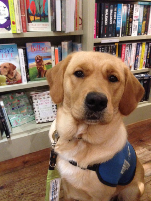 Nicola Ethel bookshop