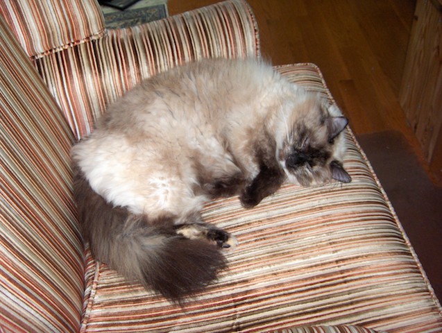 Cat in chair small